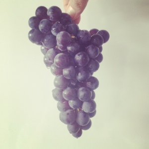 Bunch of Coronation Grapes