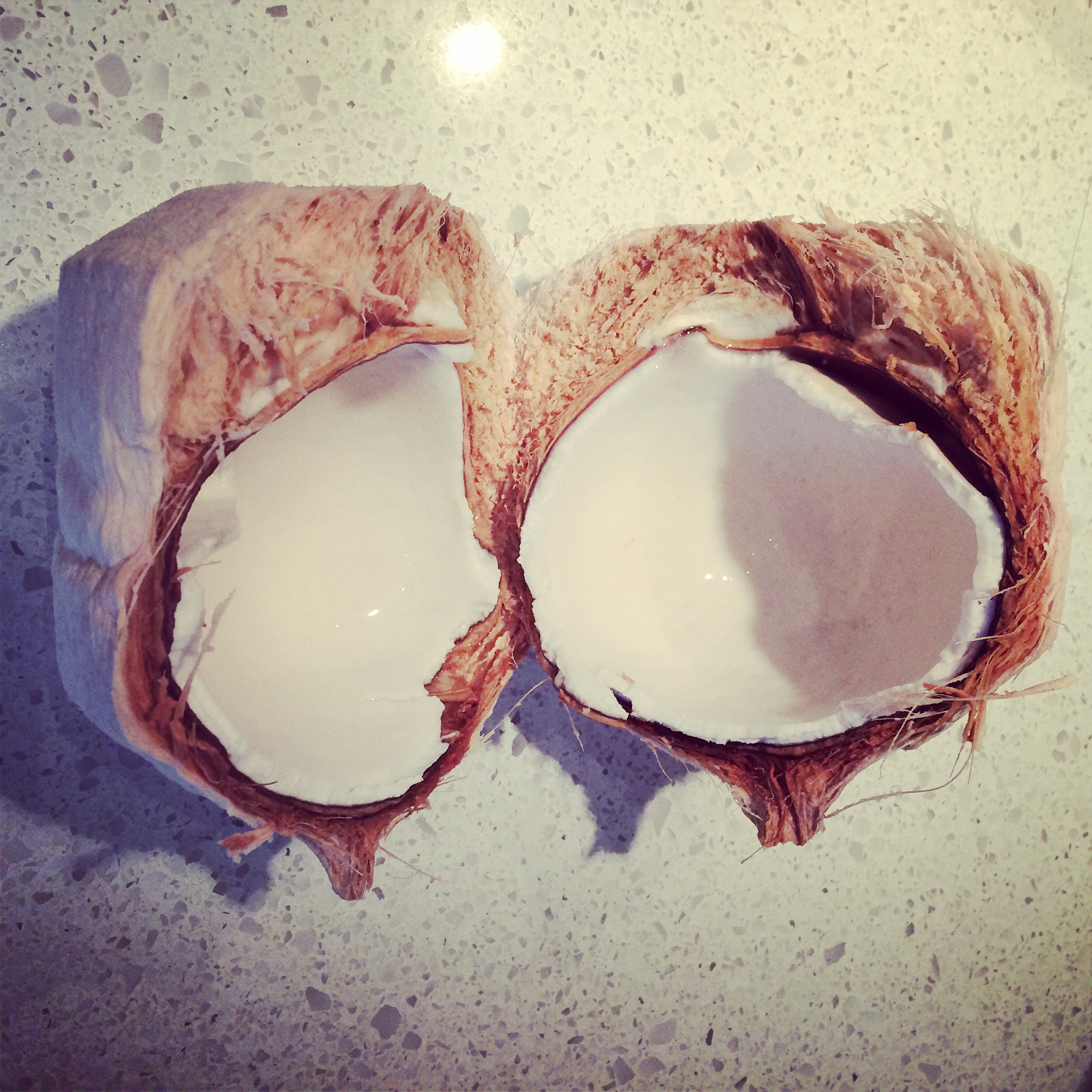 how to open a coconut in the wild